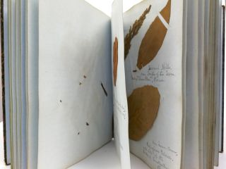 Antique Herbarium Book
