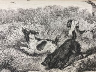The Shooter's Companion; Description of Pointers and Setters ...